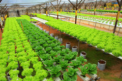 Hydroponic gospodarstwo rolne obraz stock