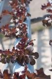 Hydroponic grönsaker Royaltyfri Foto