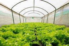 Hydroponic grönsaker i dolt förtjäna Royaltyfria Bilder
