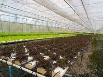 Hydroponic grönsaklantgård royaltyfria bilder