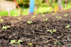 Hydroponic grönsaklantgård royaltyfri fotografi