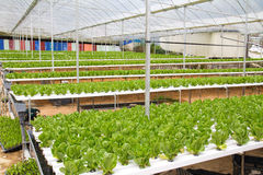 Hydroponic green house. Organic hydroponic vegetable garden at Cameron Highlands Malaysia Royalty Free Stock Photography