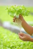 Hydroponic groente op hand Stock Afbeeldingen