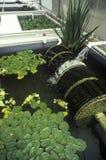 Hydroponic landbouw bij de Universiteit van Milieu het Onderzoeklaboratorium van Arizona in Tucson, AZ stock foto's