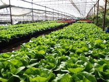Hydroponic landbouwbedrijf Royalty-vrije Stock Foto