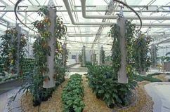 Hydroponic lantbruk på EPCOT-mitten, FL royaltyfria foton