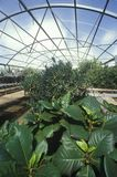 Hydroponic lantbruk på universitetet av Arizona den miljö- forskningslaboratoriet i Tucson, AZ Arkivfoto