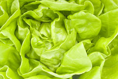 Hydroponic Lettuce Stock Photography