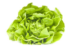 Hydroponic Lettuce. A head of hydroponic lettuce isolated on white Royalty Free Stock Images
