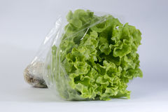 Hydroponic lettuce lollo bionda Stock Photo
