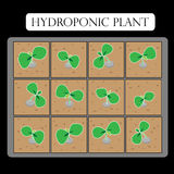 Hydroponic plant Royalty Free Stock Images