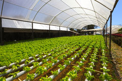 Hydroponic planting Royalty Free Stock Photography