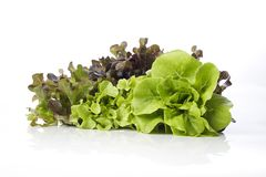 Hydroponic salade op witte achtergrond royalty-vrije stock foto