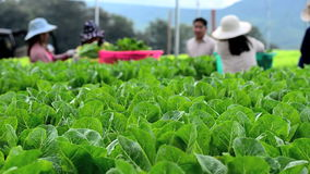 Hydroponic växa för grönsaker i växthus lager videofilmer