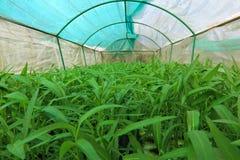 Hydroponic vegetable садовничать Стоковые Изображения