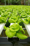 Hydroponic vegetable farm Stock Photo