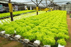 Hydroponic vegetable farm Royalty Free Stock Images