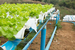 Hydroponic vegetable farm Royalty Free Stock Photos