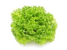 Hydroponic vegetable (Frillie Iceburg) Stock Photo
