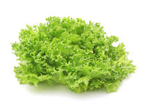 Hydroponic vegetable (Frillie Iceburg) Stock Photo