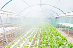 Hydroponic vegetable Stock Photos