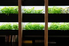hydroponic vegetable growing on shelf with artificial light in room royalty free stock photography