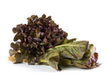 Hydroponic salad vegetable Stock Photo