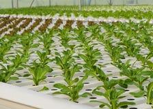 Hydroponic vegetables plantation Royalty Free Stock Photos