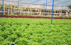 Hydroponic warzywa gospodarstwo rolne Zdjęcie Stock