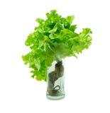 Hydroponic warzywo Obraz Stock