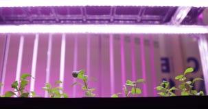 Hydroponics μέθοδος τις εγκαταστάσεις στο νερό UV αυξηθείτε τα φω'τα για την ανάπτυξη των εγκαταστάσεων φιλμ μικρού μήκους