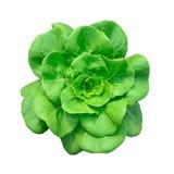 Hydroponics το πράσινο λαχανικό απομονώνει Στοκ εικόνα με δικαίωμα ελεύθερης χρήσης