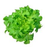 Hydroponics το πράσινο λαχανικό απομονώνει Στοκ φωτογραφίες με δικαίωμα ελεύθερης χρήσης