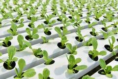 Hydroponics φυτικός κήπος στοκ εικόνες με δικαίωμα ελεύθερης χρήσης