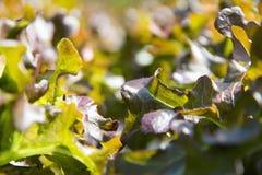 Hydroponics φυτικό αγρόκτημα Στοκ Εικόνα