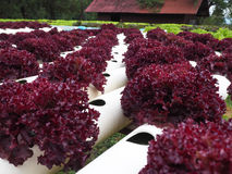 Hydroponics φυτικό αγρόκτημα Στοκ εικόνες με δικαίωμα ελεύθερης χρήσης