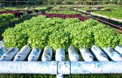 hydroponics φυτό Στοκ εικόνες με δικαίωμα ελεύθερης χρήσης