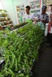hydroponics Stockfoto