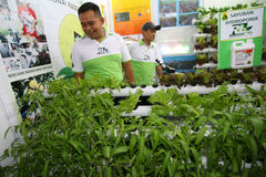 hydroponics Images stock