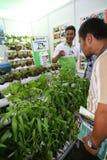 hydroponics Fotografia de Stock Royalty Free