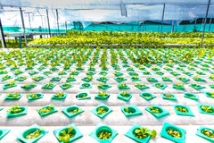 Hydroponics αγρόκτημα Στοκ Εικόνες