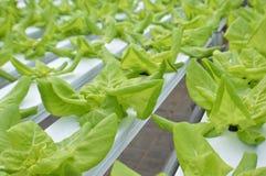 hydroponics imagens de stock