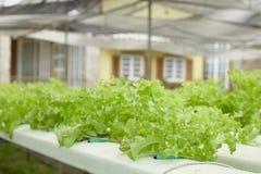 hydroponics Immagini Stock Libere da Diritti