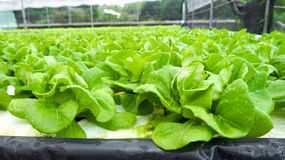 hydroponics Стоковое фото RF