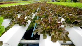 hydroponics Royaltyfria Bilder