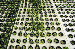 hydroponics Royaltyfri Fotografi