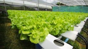 hydroponics Arkivfoto