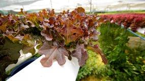 hydroponics Arkivbilder