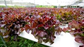 hydroponics Стоковые Фотографии RF