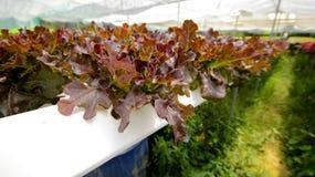 hydroponics Royaltyfri Foto